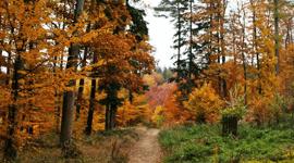 Malé cvičení proti podzimním chmurám
